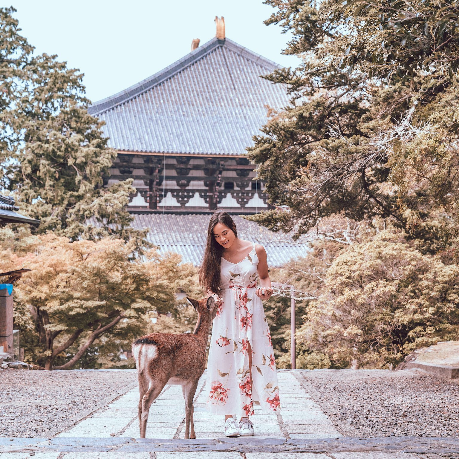 Nara, Japan Day Trip Guide from Osaka - Lauren's Lighthouse